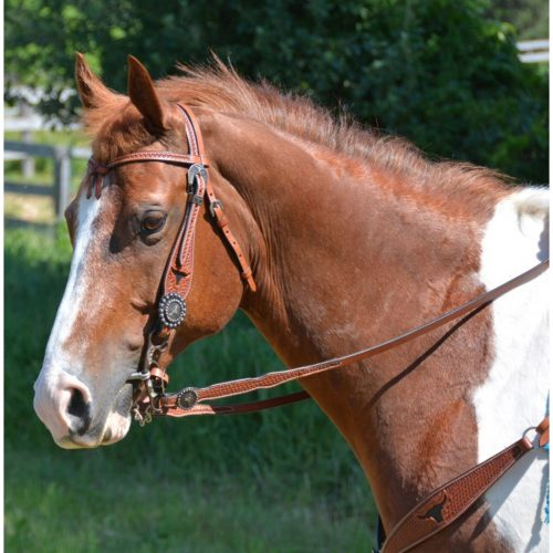 Cavalier Equestrian